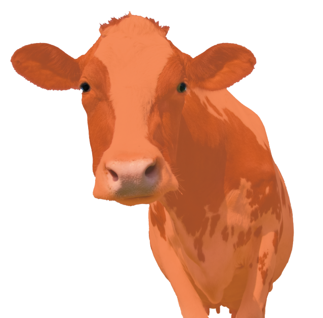 PlainCow-small-flipped