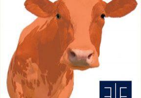 orange-cow